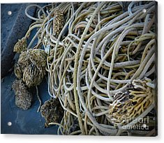 Tangles Of Seaweed 2 Acrylic Print