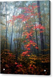 Tanglewood Forest Acrylic Print by William Schmid