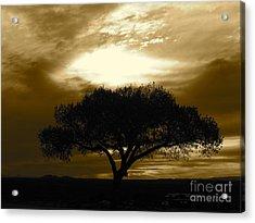 Taos Tree Acrylic Print