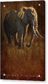 Tarangire Bull 2 Acrylic Print by Aaron Blaise