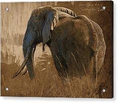 Tarangire Bull Acrylic Print