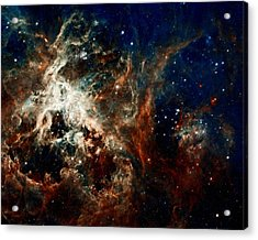 Tarantula Nebula Acrylic Print by Amanda Struz