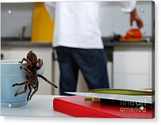 Tarantula Trying To Escape Acrylic Print by Emilio Scoti