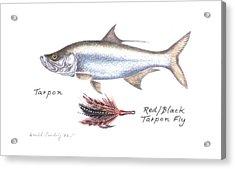 Tarpon And Red Black Tarpon Fly Acrylic Print by Daniel Lindvig