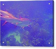 Tarpon Reef Acrylic Print by Carey Chen