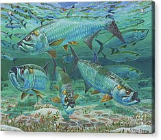 Tarpon Rolling In0025 Acrylic Print by Carey Chen