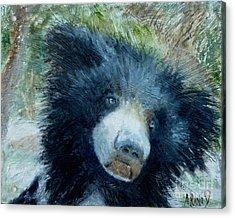 Taruni Bear Acrylic Print