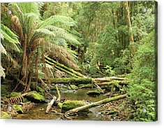 Tasmanian Rain Forest River All Profits Go To Hospice Of The Calumet Area Acrylic Print