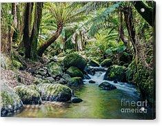 Tasmanian Rainforest Acrylic Print by Matteo Colombo