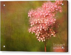 Taste Of Summer Acrylic Print by Beve Brown-Clark Photography