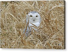 Taylor Snow Acrylic Print by Randy Bodkins