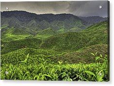 Tea Farm Acrylic Print by Mario Legaspi