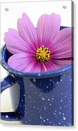 Tea Garden Acrylic Print by Frank Tschakert