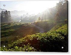 Tea Plantations And Road, Munnar Acrylic Print by Peter Adams