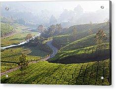 Tea Plantations, Munnar, Western Ghats Photograph by Peter ...