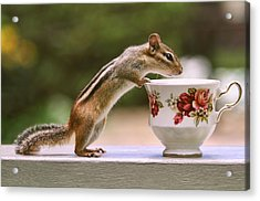 Tea Time With Chipmunk Acrylic Print