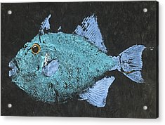 Gyotaku Triggerfish Acrylic Print by Captain Warren Sellers