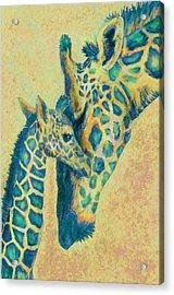 Teal Giraffes Acrylic Print