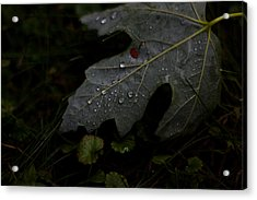 Tears Of A Leaf Acrylic Print by Michael Murphy