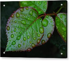 Teary Rose Leaf Acrylic Print by Juergen Roth