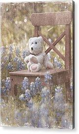 Teddy Bear And Texas Bluebonnets Acrylic Print