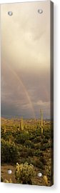 Teddy-bear Cholla Opuntia Bigelovii Acrylic Print by Panoramic Images