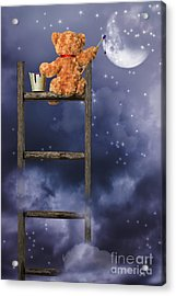 Teddy Painting At Night Acrylic Print by Amanda Elwell