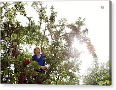 Teenage Boy Climbing An Apple Tree Acrylic Print by Thomas Fredberg