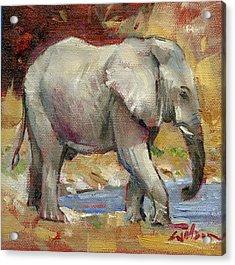Teenage Tusker Acrylic Print by Ron Wilson