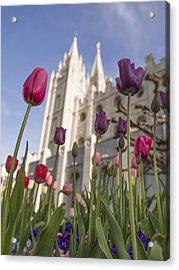 Temple Tulips Acrylic Print