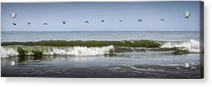 Acrylic Print featuring the photograph Ten Pelicans by Steven Sparks