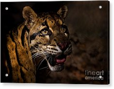 Tenacious Embers Acrylic Print by Ashley Vincent