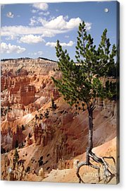 Acrylic Print featuring the photograph Tenacious by Meghan at FireBonnet Art