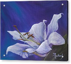 Tender Lily  Acrylic Print