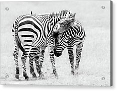 Tender Moment Acrylic Print