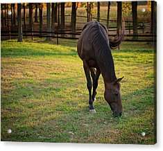 Acrylic Print featuring the photograph Tender Spring Grass by Kristi Swift