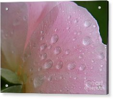 Acrylic Print featuring the photograph Tender Touch by Agnieszka Ledwon