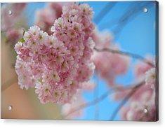 Tender Whisper. Pink Spring In Amterdam Acrylic Print by Jenny Rainbow
