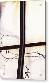 Tendrils Acrylic Print by Margie Hurwich