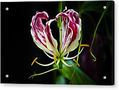 Tendrils Of My Mind Acrylic Print by Christi Kraft