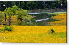 Tennessee Black-eyed Susan Field Acrylic Print