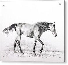 Tennessee Walking Horse Acrylic Print by Karen Broemmelsick