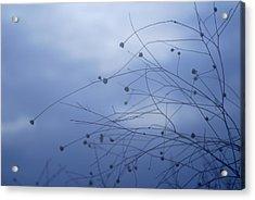 Tentaculos Del Cielo Acrylic Print by Guido Montanes Castillo