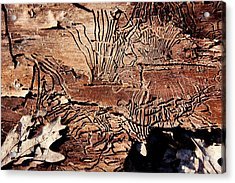 Termite Trails Acrylic Print by Kevin Grant