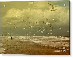 Terns In The Clouds Acrylic Print