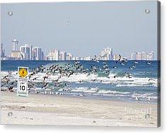 Terns On The Move Acrylic Print