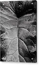 Terrestrial  Acrylic Print by JC Findley