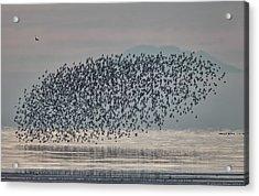Terror In The Sky Acrylic Print by Daniel Behm