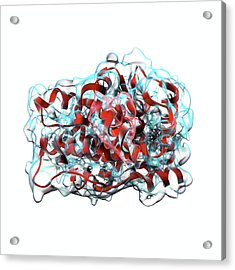Testosterone Molecule Acrylic Print by Animate4.com/science Photo Libary