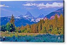 Teton Backside Wildflowers Acrylic Print by Larry Bodinson